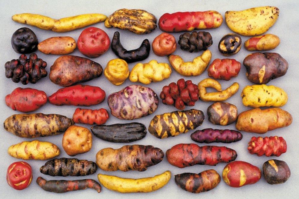 Pommes de terre, Pérou.jpg