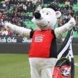 Fan Du Stade Rennais